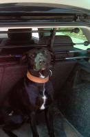 Foto 6 Super Süße Labrador-Mischlinge suchen AB SOFORT ein neues Zuhause!