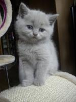Super süße Kitten