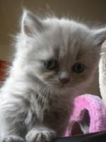 Foto 3 Super süße Kitten