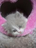 Foto 4 Super süße Kitten