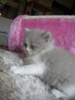 Foto 8 Super süße Kitten