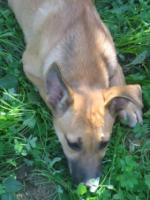 Foto 5 TATJANA - süßer Welpe sucht Familie (Tierschutzhund)