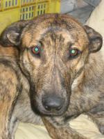 Foto 2 TIGRA – sie hat noch ihr ganzes Leben vor sich (Tierschutzhund)