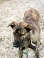 Foto 4 TIGRA – sie hat noch ihr ganzes Leben vor sich (Tierschutzhund)