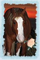 Foto 6 TOP Deckhengst A Smokin Little Gun (AQHA & APHA, Foundation, Quarter Pony, Pinto)