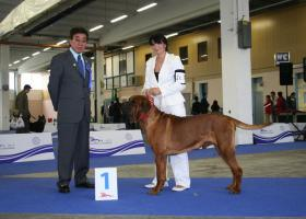 Foto 4 TOSA INU – Welpen Top Quality