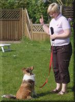 Foto 4 T.E.A.M.- Ihre persönlichen Hundecoaches