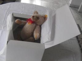 Foto 3 Teddy von Steif