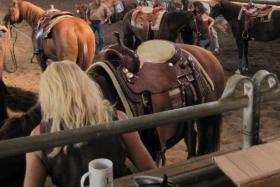Teilnahme an privatem überdachten Pferdeflohmarkt