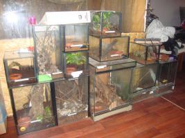 Terrarien verschiedenen Größen ( würfel für  spinnen und ähnliches)