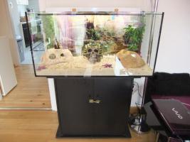 Foto 3 Terrarium mit Unterschrank
