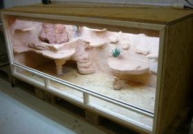 Foto 4 Terrarium komplett mit 1 Baby Bartagame…