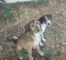 Foto 3 Terriermischling