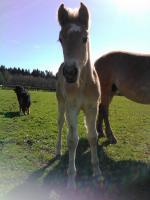 Foto 2 Tessi, Fanny, Vally, .. suchen