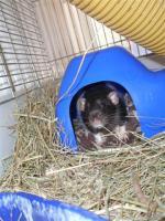 Foto 2 Tierarzthelferin bietet liebevolle Katzen- und Kleintierbetreuung bei Ihnen im Haus an!