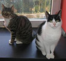 Foto 4 Tierarzthelferin bietet liebevolle Katzen- und Kleintierbetreuung bei Ihnen im Haus an!