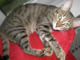 Foto 3 Tierarzthelferin bietet liebevolle Tierbetreuung in Ihren 4 Wänden an