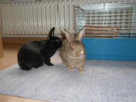Foto 4 Tierarzthelferin bietet liebevolle Tierbetreuung in Ihren 4 Wänden an