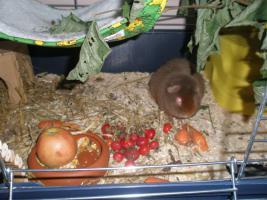 Foto 5 Tierarzthelferin bietet liebevolle Tierbetreuung in Ihren 4 Wänden an