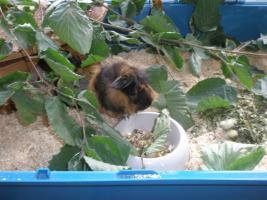 Foto 6 Tierarzthelferin bietet liebevolle Tierbetreuung in Ihren 4 Wänden an