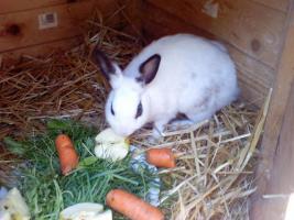 Foto 7 Tierarzthelferin bietet liebevolle Tierbetreuung in Ihren 4 Wänden an