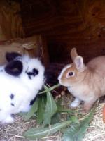 Foto 8 Tierarzthelferin bietet liebevolle Tierbetreuung in Ihren 4 Wänden an