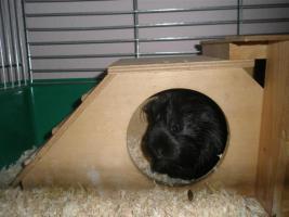 Foto 12 Tierarzthelferin bietet liebevolle Tierbetreuung in Ihren 4 Wänden an