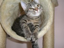Foto 16 Tierarzthelferin bietet liebevolle Tierbetreuung in Ihren 4 Wänden an