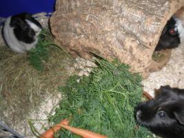 Foto 18 Tierarzthelferin bietet liebevolle Tierbetreuung in Ihren 4 Wänden an