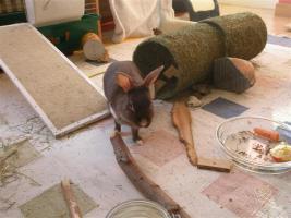 Foto 19 Tierarzthelferin bietet liebevolle Tierbetreuung in Ihren 4 Wänden an