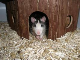 Foto 20 Tierarzthelferin bietet liebevolle Tierbetreuung in Ihren 4 Wänden an