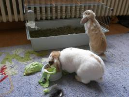 Foto 21 Tierarzthelferin bietet liebevolle Tierbetreuung in Ihren 4 Wänden an