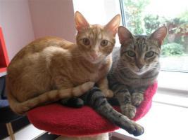 Foto 22 Tierarzthelferin bietet liebevolle Tierbetreuung in Ihren 4 Wänden an