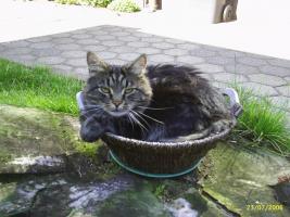 Foto 3 Tierbetreuung / Hunde-, Katzen-, Kleintierbetreuung