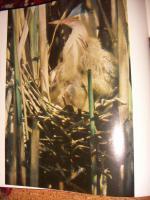 Foto 4 ''Tiere vor der Kamera''...1975