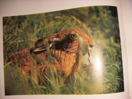 Foto 5 ''Tiere vor der Kamera''...1975