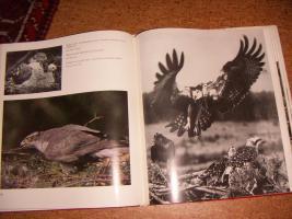 Foto 6 ''Tiere vor der Kamera''...1975