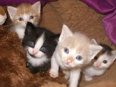 Foto 3 Tiere benötigen Ihre Hilfe