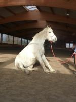 Foto 4 Tierheilpraktiker Ausbildung / Zertifiziert