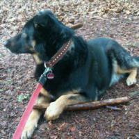 Foto 3 Tierisch gute Geschenke Gutscheine : Hunde Führerschein    66 Euro  Kassel