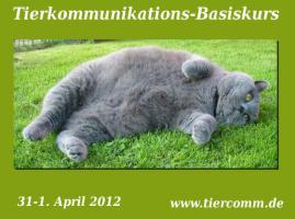 Tierkommunikation Seminar Bremen 31.März-1 April 2012