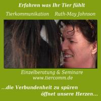 Foto 2 Tierkommunikation Seminar Oldenburg  3/4  Dez.11 -3/4 März 12