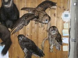 Foto 3 Tierpräparatesammlung