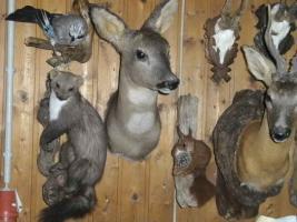 Foto 4 Tierpräparatesammlung