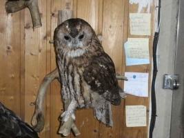 Foto 6 Tierpräparatesammlung