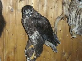 Foto 7 Tierpräparatesammlung