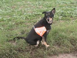 Tips Hunde Erziehung von Dog Team NRW -K9