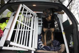 Foto 6 Tips Hunde Erziehung von Dog Team NRW -K9