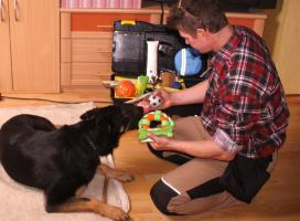 Foto 7 Tips Hunde Erziehung von Dog Team NRW -K9