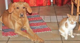 Foto 10 Tips Hunde Erziehung von Dog Team NRW -K9